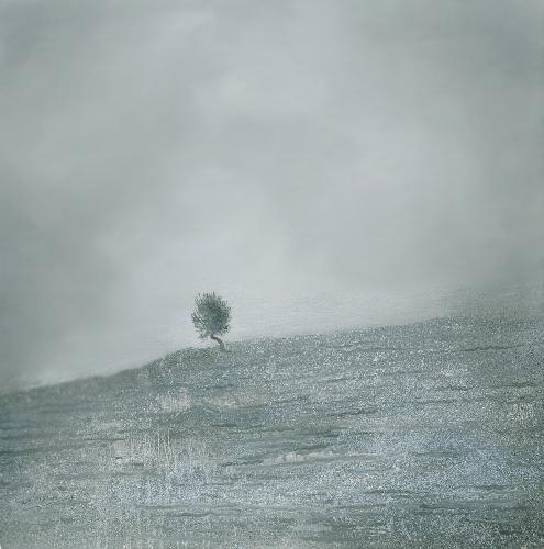 孤独系列-广寒秋