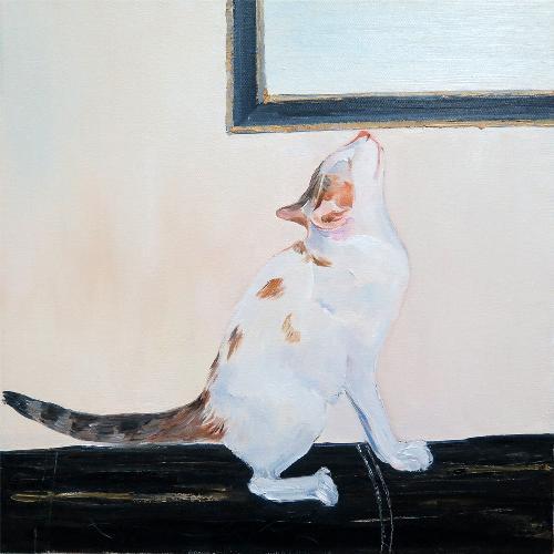 我的猫咪03