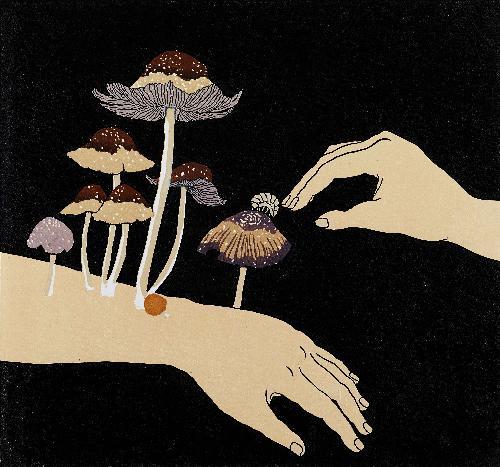 直到长出蘑菇