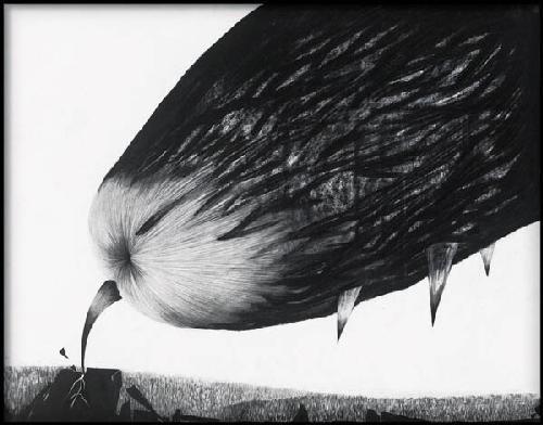 无翼鸟的飞翔